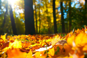 macro photo of a fallen leaves in autumn forest, shallow dof